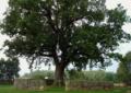 Taller dels arbres